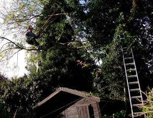 Rob Roy Trees Image 11